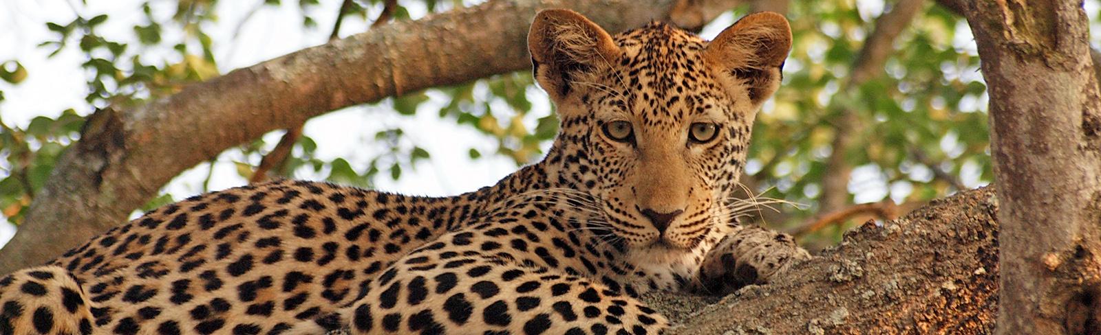 Südafrika – Krüger National Park