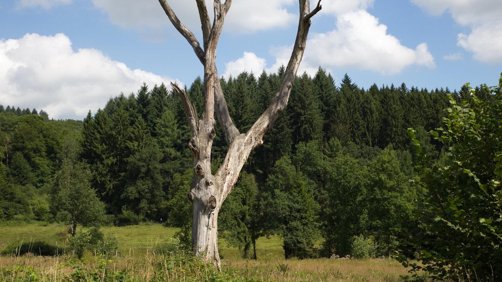 zwischen Mausbach und alte Heide in Freudenberg